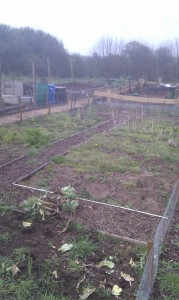 First day on the allotment
