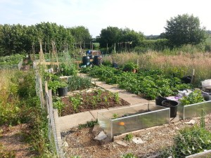 Allotment at the end of June