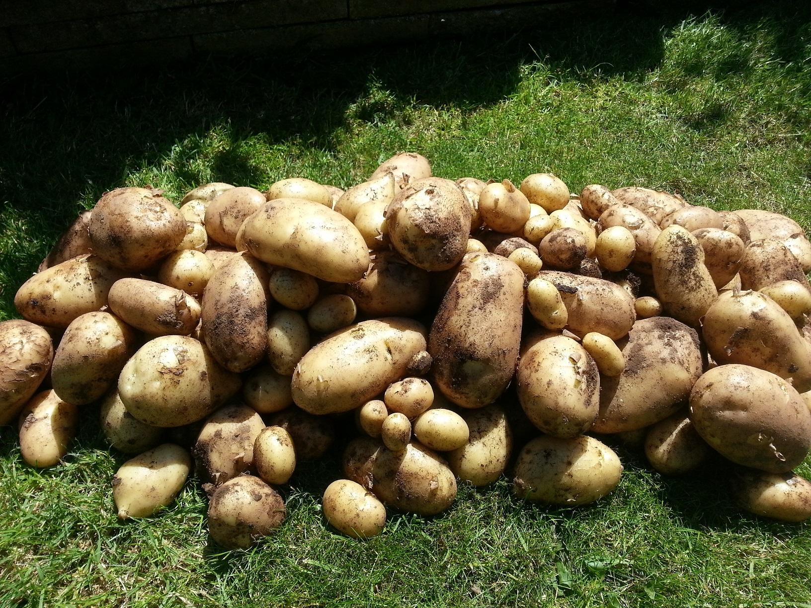 Harvest Time The Vegetable Plot