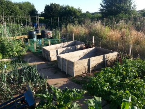 Two new raised beds